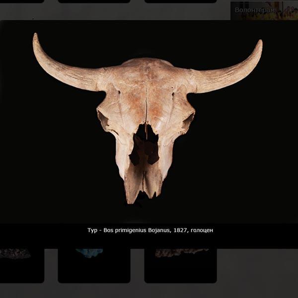 Сайт львовского государственного природоведческого музея #1